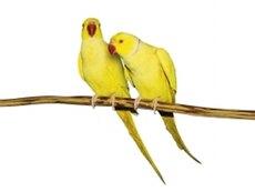 Имена для попугаев: как выбрать?